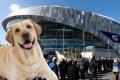 Tottenham Hotspur në stadiumin e ri ka edhe tualet për qen